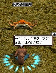 がくちゃとロマで。蟹さんの顔文字