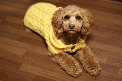 セーター♪