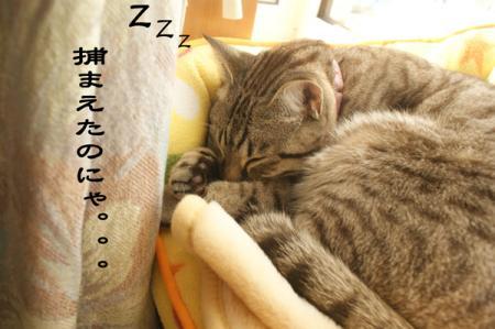 1_20090401235435.jpg