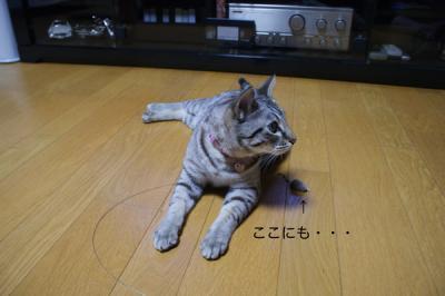4_20090512154855.jpg