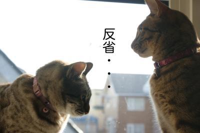 5_20090520141356.jpg