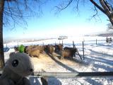 羊が丘のひつじ