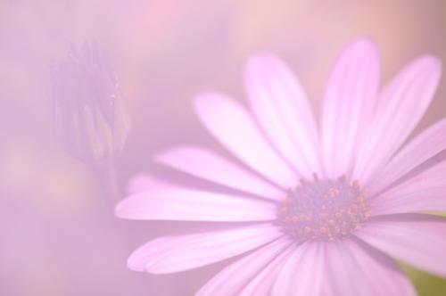 DSC_6320-L.jpg