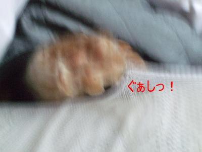 2008_11300004.jpg