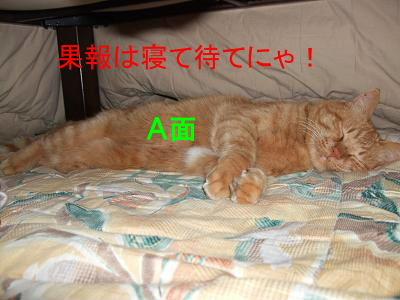 2009_01150005.jpg