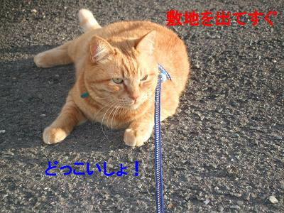 2009_04180012.jpg