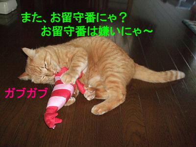2009_05080015.jpg
