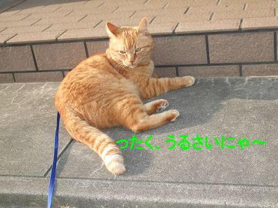 2009_05130013.jpg