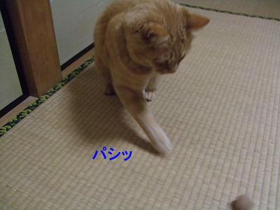2009_05250010.jpg