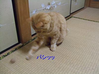 2009_05250012.jpg