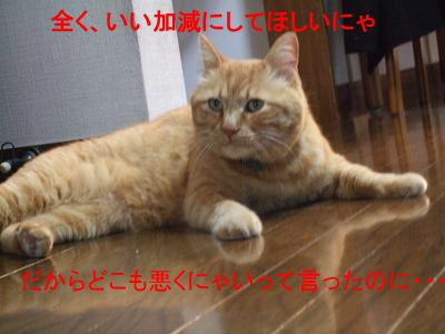 2009_05280012.jpg