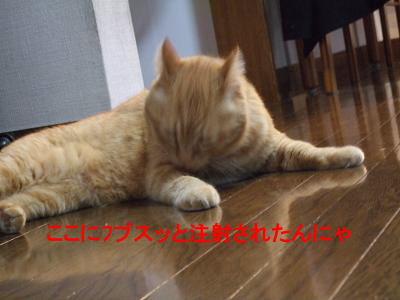2009_05280013.jpg