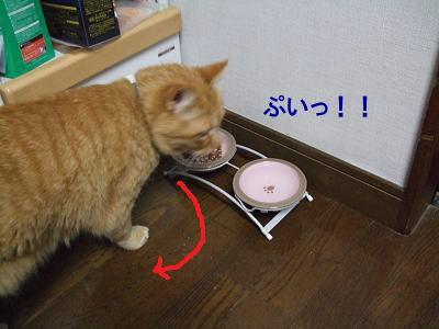 2009_06030012.jpg