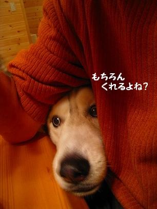 IMG_8661.jpg