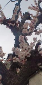 それでも春は来る