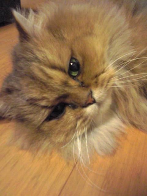 2008.12.11猫2