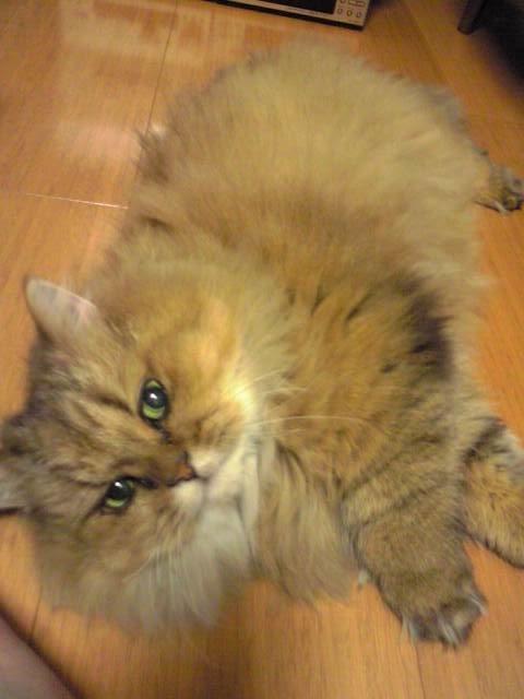 2008.12.11猫