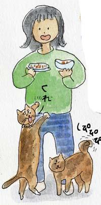 猫膀胱炎2