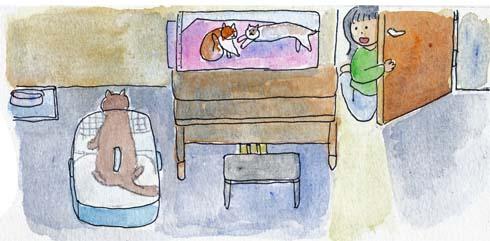 猫膀胱炎3