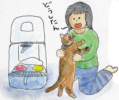 猫膀胱炎4