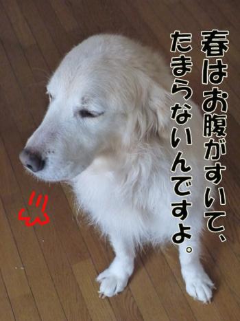 2012_03290010.jpg