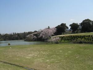 第53回岡会計コンペ_桜の美しい池越えショートホール