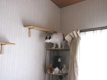 20100206_124-mini.jpg