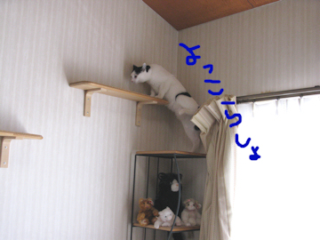 20100206_125-mini.jpg