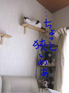 20100206_127-mini.jpg
