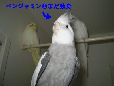 2006.9月~ 2139
