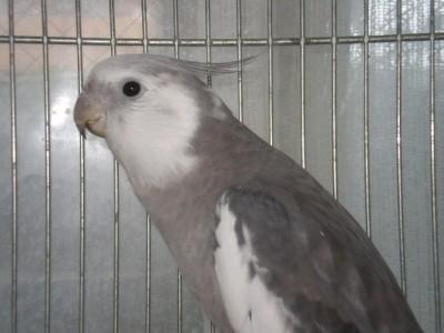 2006.9月~ 1766