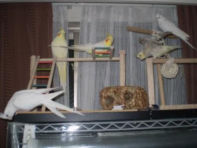 2006.9月~ 2245
