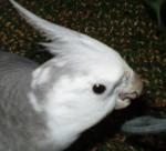 2006.9月~ 2232