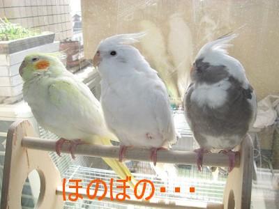 Oka_4490_1.jpg