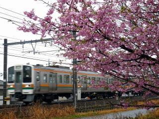 河津桜と愛環(JR乗り入れ車)
