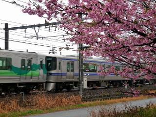 河津桜と愛環