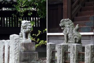 稲荷神社 本殿の狛犬