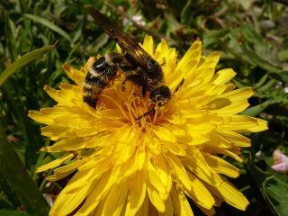南公園 蜂