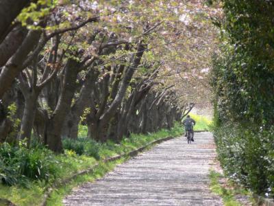 春の散歩にて その1