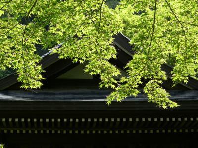 鎌倉 円覚寺にて その2