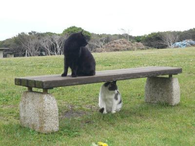 城ヶ島の猫 その1