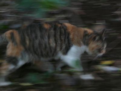 城ヶ島の猫 その2