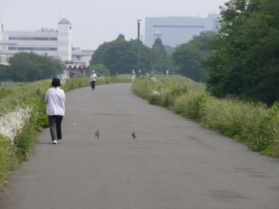 鳩とお散歩