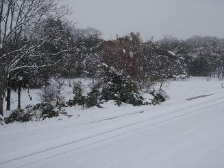 雪1226