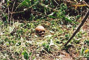 s-Plotで見つかった骸骨