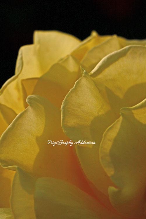 0524-Roses 030