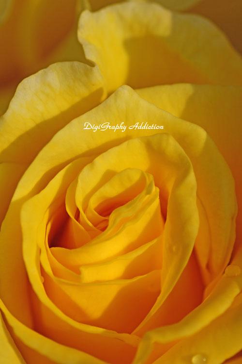 0524-Roses 035
