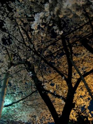 夜桜3s-