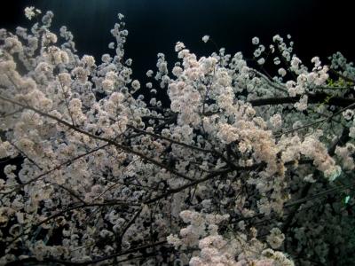夜桜4s-