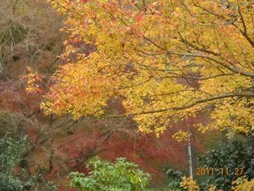 茨城県 植物園1